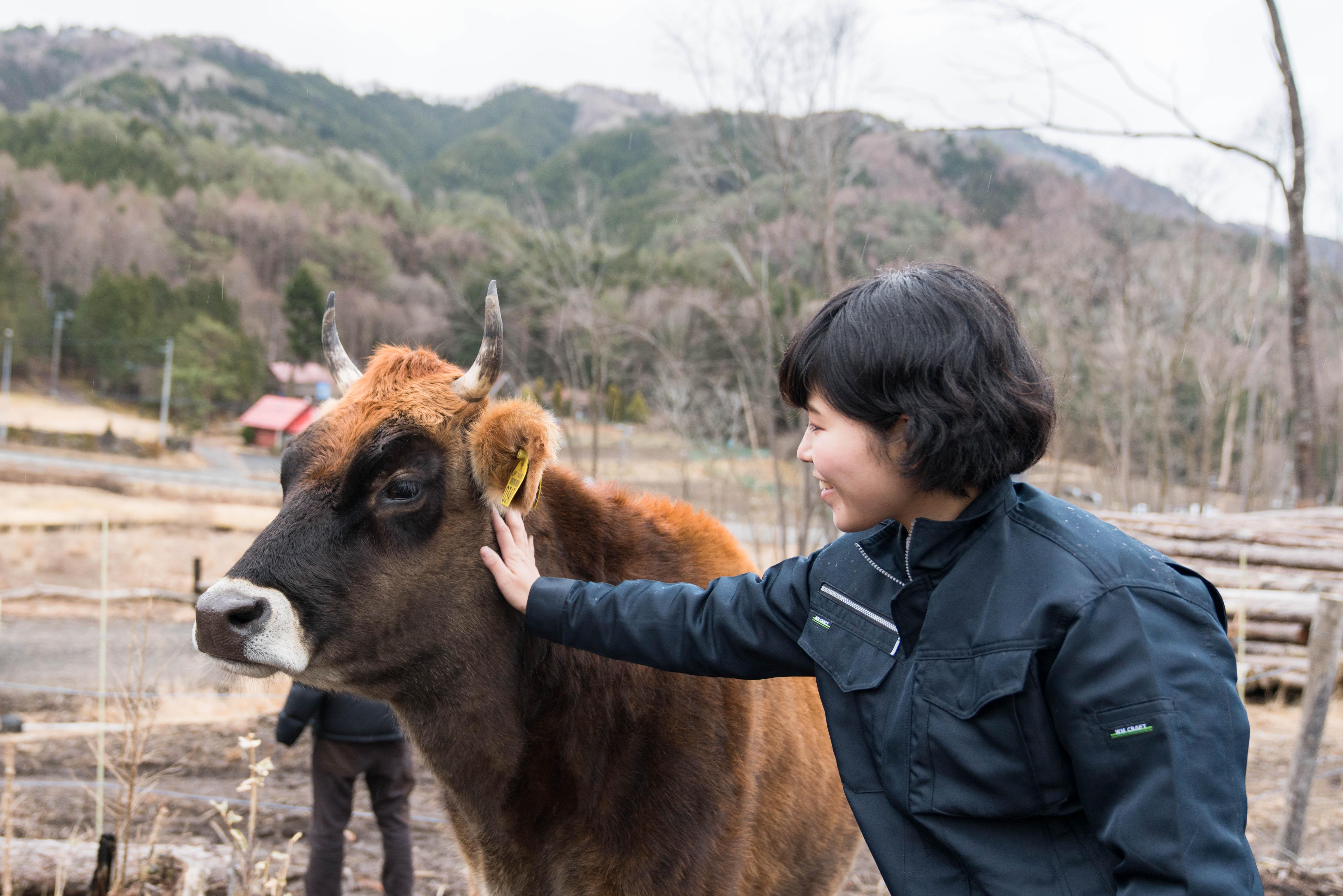 4頭の牛を7箇所の山中に放牧、野草を餌とすることで薬品などに頼らない山の整備管理を行っている。参加者の後りをゆっくりとついてくる牛たち。牛は寂しがりやなのだとか。
