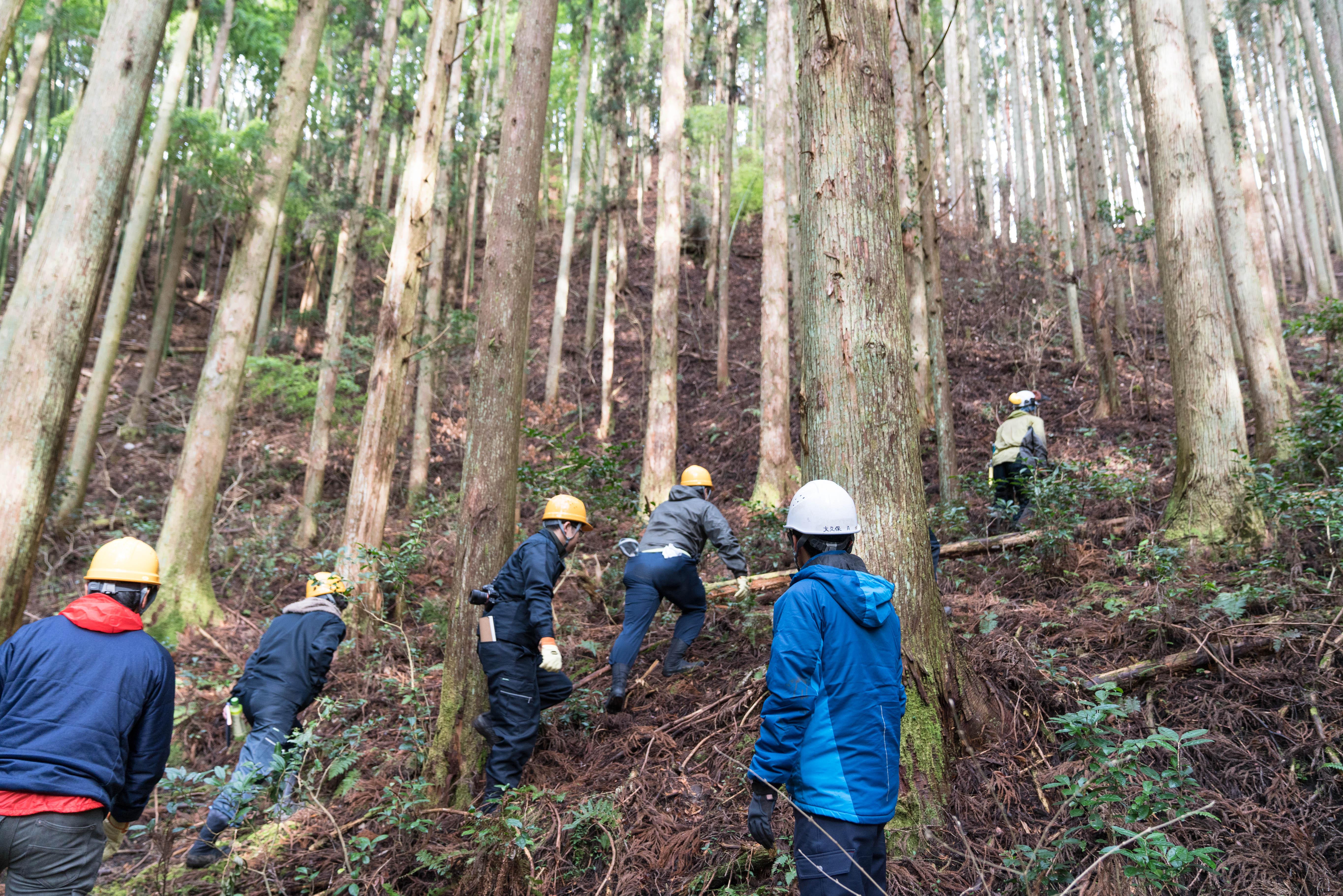 参加者も実際に現場へ。技能職員の永井大幸さんの間伐作業を間近で体験。永井さんはすいすいと登ってしまうが、道ではない道に足を取られてしまう。